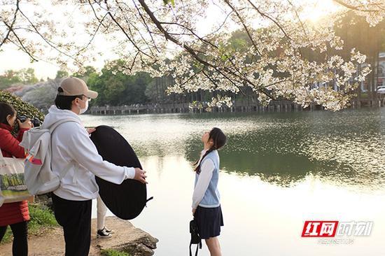 漂亮小姐姐在樱花树下拍下美美的照片。