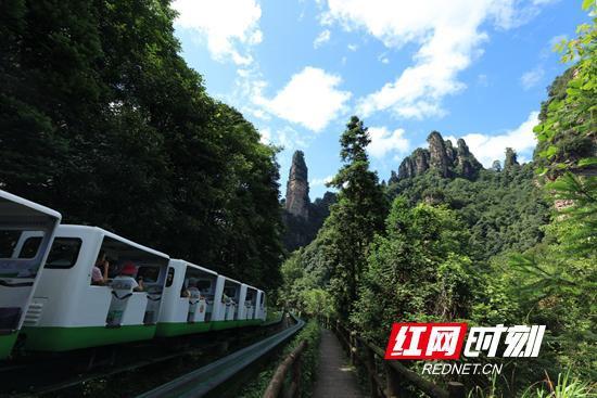 7月27日,游人乘不雅观光电车游览十里画廊(吴勇兵 摄)
