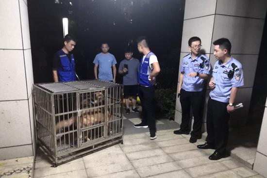 在整治行动中,岳麓公安分局金星派出所民警联合专职捕犬队员在小区内扣押两只禁养犬只。 警方供图
