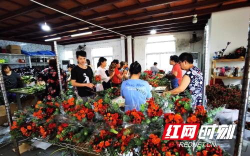 来自埃塞俄比亚AEGG皇后庄园的玫瑰花抵达湖南,备受青睐。