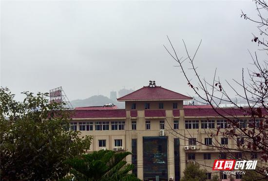 今日永州,阴雨有雾。刘林霞 摄