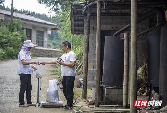 每年,蒋爱文的山胡椒油产量大约是1000斤左右,原材料靠自己采摘远远不够,还需要从附近村民手上收购原材料。每斤原材料果子费用在三元左右,勤快的村民一个月下来可以赚1-2千元。