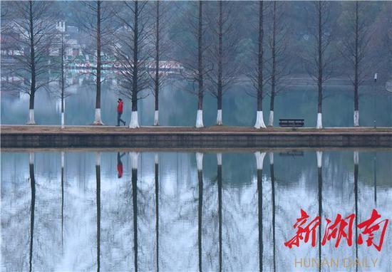 (2月3日下午,一位市民漫步在通往烈士公园年嘉湖湖心的小径上。范远志摄)