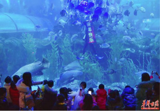 长沙海底世界潜水员与群鱼共舞送祝福资料图(湖南日报·华声在线记者 徐行 摄)