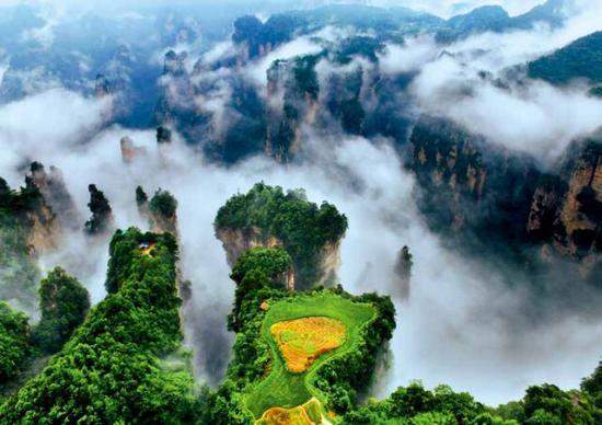 (雨雾缭绕的峰林中,空中稻田更显独特。刘长 摄)