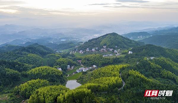 邵阳市新宁县石云村是全省重点的扶贫村,这里海拔高,山林面积广大,一个村的占地面积有一百多平方公里。
