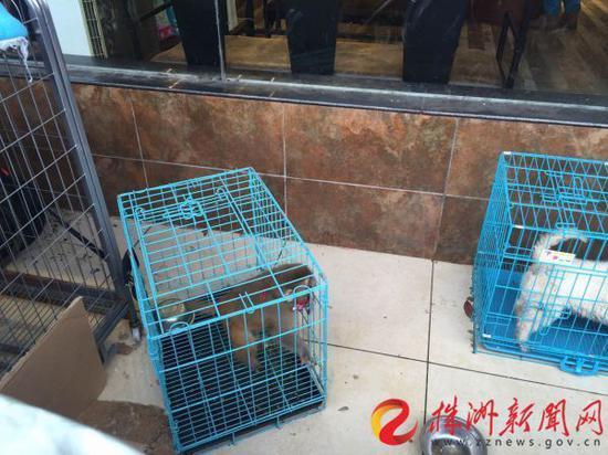 小猴子和宠物狗一同被摆在宠物店门口