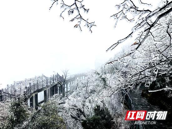 12月6日,张家界天门山现雾凇景观。龚晓敏 摄