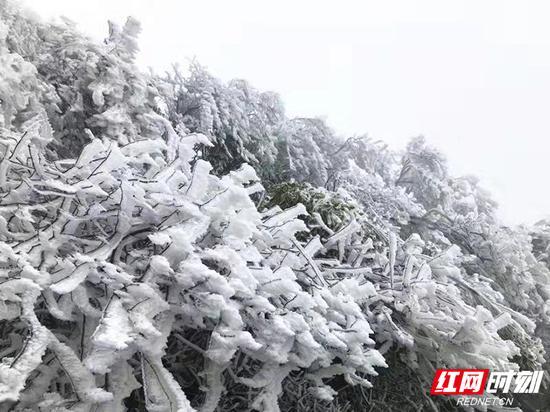 纷纷扬扬的雪花给整个景区披上了一层洁白的外衣,变身银装素裹的冰雪世界。