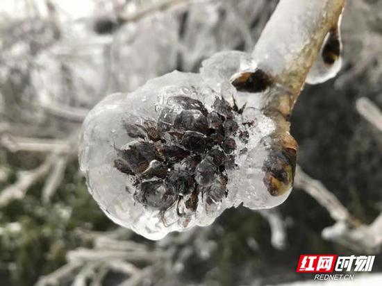 整个天门山景区银装素裹,雪景如画。