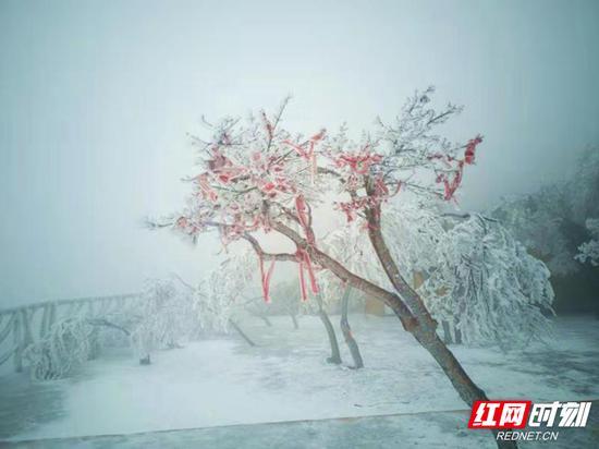 山上的树枝、树叶和小草都被冰雪覆盖,有的被压弯了枝头,有的则傲视冰雪。