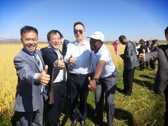中国专家在马达加斯加杂交水稻试验田测产。(受访者供图)