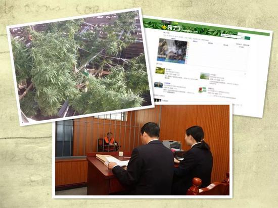"""左上:警方查获的大麻;右上:"""" 园丁丁 """" 论坛页面;下图:检察官提讯嫌疑人"""