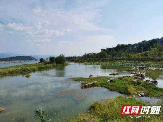 兴宁污水处理厂处理过的尾水入湖之前,要经过人工湿地的二次净化。
