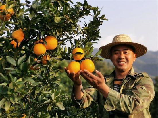 新宁:崀山脐橙香 致富歌声亮