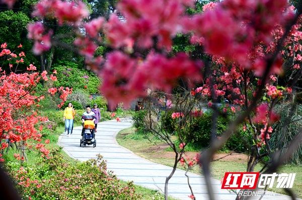 湖南省植物园。(资料图)