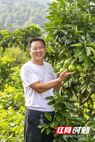 笑容2020丨洞口县清水村:红三柚