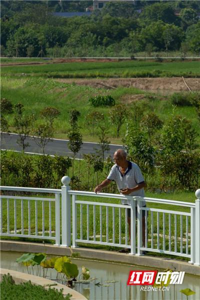 由于生态净化效果明显,水质好,池中养 了观赏鱼,村民正在喂鱼。