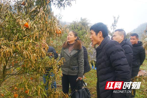 湖南省民政厅v教程帮扶:农业专家手把手教教程宏编村民图片