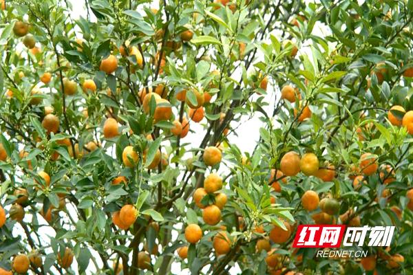 http://www.hunanpp.com/shishangchaoliu/114075.html