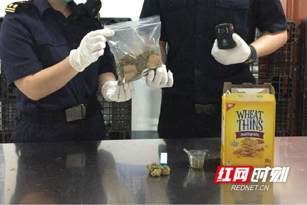长沙黄花机场海关工作人员查获走私毒品大麻。