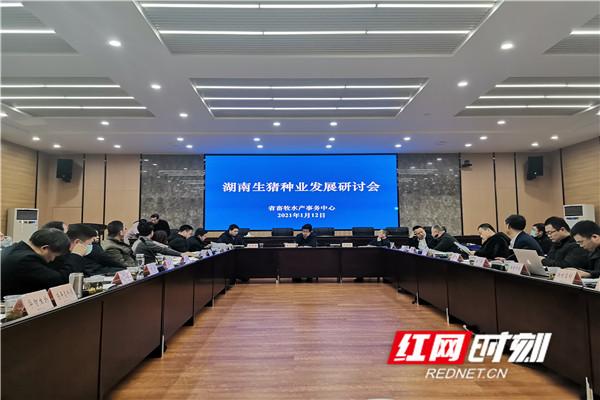 1月12日,湖南生猪种业发展研讨会在长沙召开。