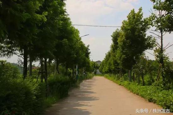 (图来自醴陵旅游)