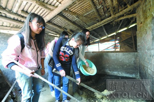 刘晨曦(左)等女生在养蛆场一起劳动。