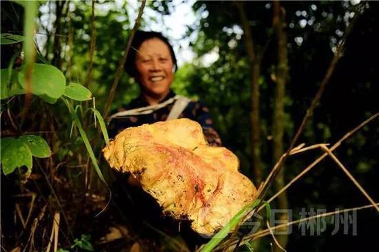 郴州深山发现两件罕见植物 均价值千金(图)