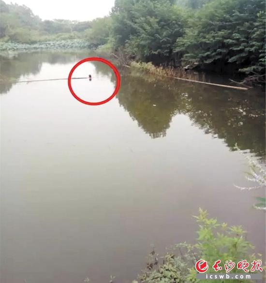 ↑跳水女子抱着塘中的竹竿,仅剩头部露出水面。均为警方供图