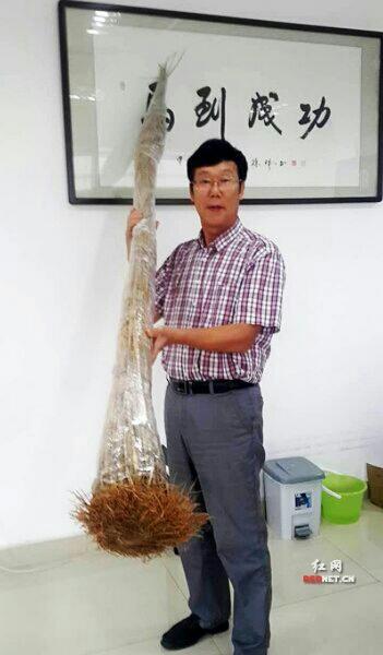 海归科学家夏新界和他的巨型稻标本。