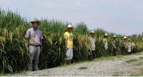 """夏新界(前排左一)站在""""巨型稻""""中间。中科院亚热带农业生态研究所供图。"""