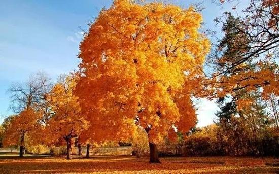 秋天的时候,这里大片大片的红色让人惊艳,特别是如果能从高空中俯瞰,又