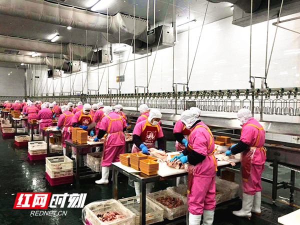 湘佳牧业公司员工在车间分割生鲜家禽产品。贺新初 摄
