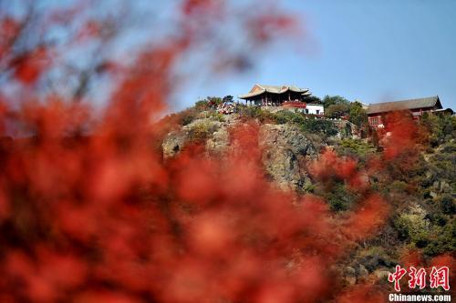 资料图,随着霜降节气的到来,香山红叶也进入了最佳观赏季节。 金硕