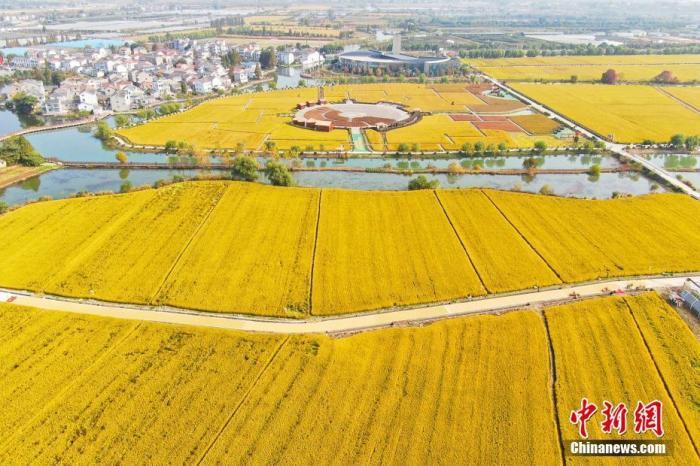 资料图:航拍丰收季的稻田。中新社记者 泱波 摄