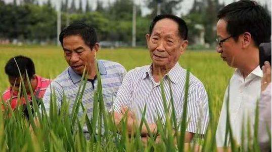湖南杂交水稻研究中心研究员杨耀松提供