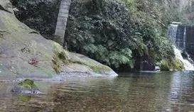 白虎堂溪岸