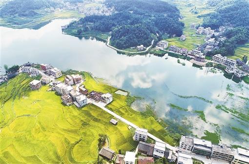 8月28日,新邵县龙溪铺镇卓笔村,碧绿的库水、葱郁的植被、金黄的田野构成了一幅秀美的生态画卷。 湖南日报记者 李健 摄