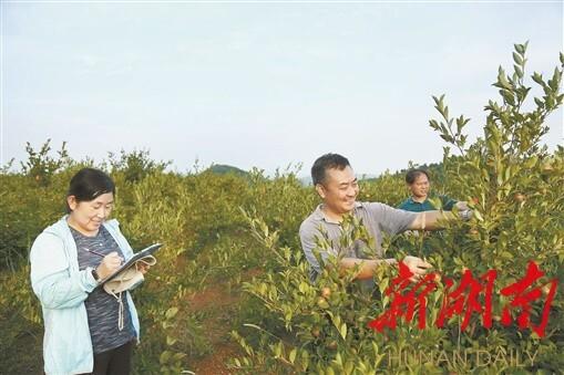 (8月10日,邵阳县小溪市乡大禾村,陈永忠(右二)在油茶基地考察调研。湖南日报记者 唐俊 摄)