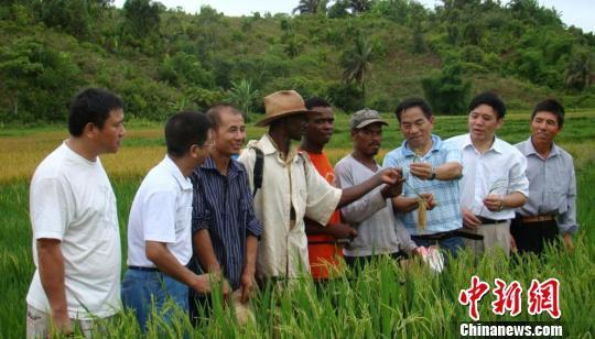 中国育种专家在马达加斯加传授杂交水稻选育技术。湖南省委宣传部供图