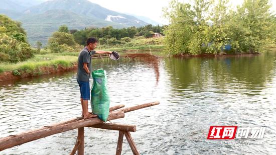 每包重达八十斤左右的鱼饲料,从搬运到投喂,都是成盛财一个人完成。