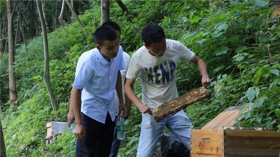 湖南农大博士团深入鹤城区开展农业产业调研。