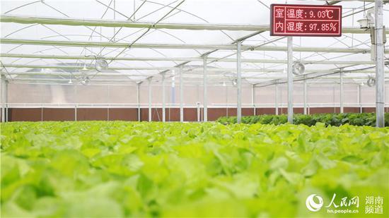 通过智慧农业,能敏锐感知种植环境。人民网李芳森
