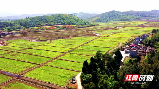 太和镇神下村2600亩高标准农田建设示范基地,上千亩油菜长势良好。