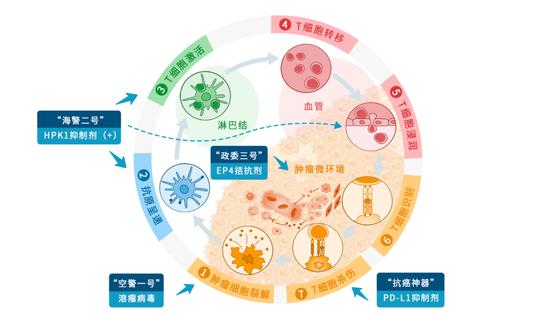 """图丨肿瘤免疫治疗"""" 7 环""""(来源:受访者提供)"""