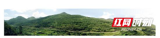花垣县雅酉镇退耕还林2019年实景对比照,树茂林密,尽显生态之美。