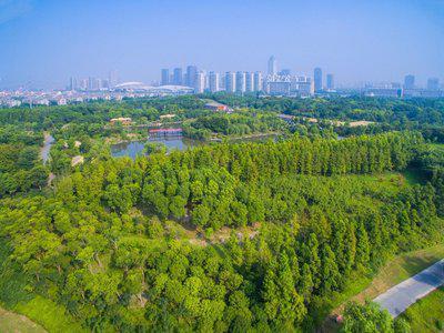 荒漠化治理换挡提速 衡阳市森林覆盖率达48.24%