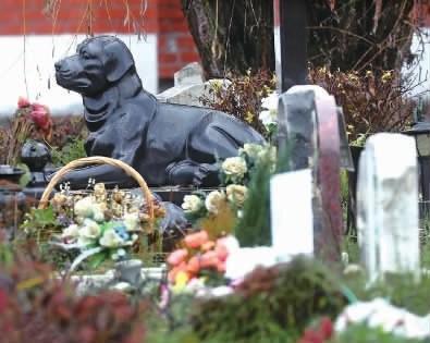 俄罗斯莫斯科宠物公墓内的墓碑照片。现代民众对家庭宠物十分重视,许多家庭会为它们举办正式葬礼,并将它们埋葬在这样的宠物公墓作为纪念。新华社图