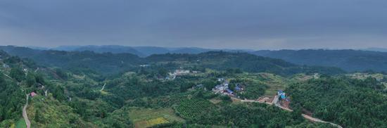 杨木村航拍图。
